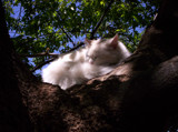 Sleeping Cat by skapie, Photography->Animals gallery
