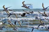 Flight by SR21, Photography->Birds gallery