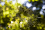 Web by whttiger25, Photography->Nature gallery