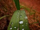 Drops 1 by brandondockery, Photography->Macro gallery