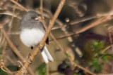 Junco by photog024, Photography->Birds gallery