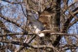 Hawk Escape by photog024, Photography->Birds gallery