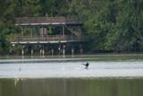 Cormorant by photog024, Photography->Birds gallery