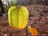 A Sharp Shadow by brandondockery, photography->nature gallery