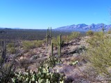 Vacation in Tucson 2 by brandondockery, photography->landscape gallery