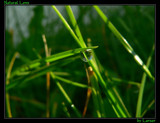 Natural Lens by Larser, Photography->Macro gallery