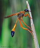 Mr Big. by trisbert, Photography->Insects/Spiders gallery