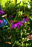 Sundancers by tsmyth90, Photography->Flowers gallery