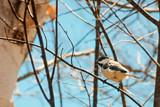 Another Little Bird ... by Eubeen