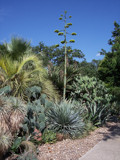 Cactus Garden by CUTiger1989, Photography->Landscape gallery