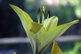 Bokeh by Fergus, photography->flowers gallery