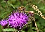 Pollen Collector by Dunstickin