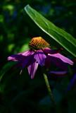 Hidden by tsmyth90, Photography->Flowers gallery