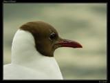 Sharp & Round by Larser, Photography->Birds gallery