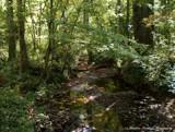 My Backyard by brandondockery, photography->nature gallery