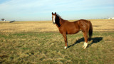 Fort Worth Horse by taradactyl, Photography->Animals gallery