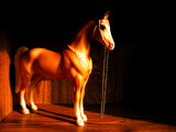 Bookcase Horse by Kevin_Hayden, photography->still life gallery