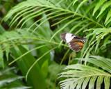 Precious Perch by deep_sapphire, Photography->Butterflies gallery