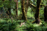 Hoh Valley Rainforest by whttiger25, photography->landscape gallery