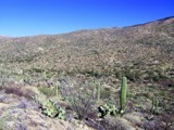 Vacation in Tucson 1 by brandondockery, photography->landscape gallery