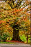 Autumnal Chestnut Tr... by corngrowth