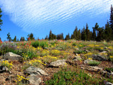 Alpine Flowers (revised) by whttiger25, Photography->Landscape gallery
