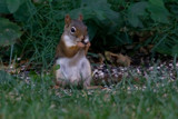 squirrels eat by photog024, Photography->Animals gallery