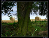 This Tree ... by Larser, photography->landscape gallery
