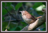 the last of the wrens by photog024, Photography->Birds gallery