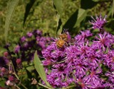 Why are the Honey bees disapearing??? by brandondockery, photography->insects/spiders gallery