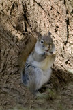 A Happy Squirrel by photog024, Photography->Animals gallery