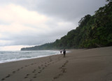 Rainforest meets the sea by whttiger25, Photography->Shorelines gallery