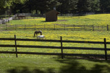 Out to Pasture by photog024, Photography->Landscape gallery