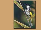 Enchanting Cheekiness. by trisbert, Photography->Birds gallery