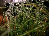 Mini onion plant by brandondockery, Photography->Macro gallery