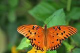 Spot by SR21, Photography->Butterflies gallery