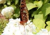 Butterfly on Grandma's Flowers by brandondockery, Photography->Butterflies gallery
