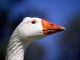 Curiosity. by trisbert, Photography->Birds gallery